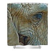 Elephant's Face Shower Curtain