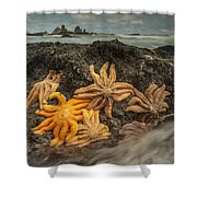 Eleven-armed Sea Stars At Low Tide Shower Curtain
