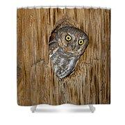 Elf Owl Shower Curtain