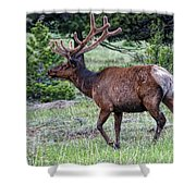 Elk Bull Shower Curtain