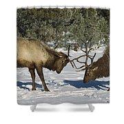 Elk  Bulls Fighting In Yellowstone Shower Curtain