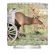 Elk Drawn Carriage Shower Curtain