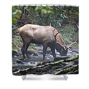 Elk Drinking Water From A Stream Shower Curtain