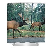 Elk Shower Curtain