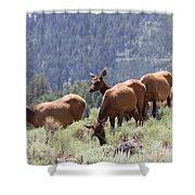 Elk Family - Yellowstone N P Shower Curtain