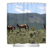 Elk Family Shower Curtain