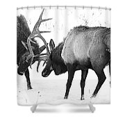 Elk Fighting Black And White Shower Curtain
