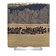 Elk Herd And Horses Panorama 18x161 Shower Curtain
