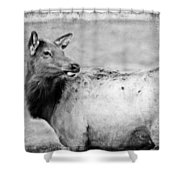 Elk IIi Shower Curtain
