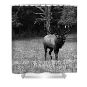 Elk In Black And White Shower Curtain