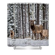 Elk In Jasper Shower Curtain