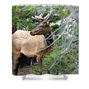 Elk In Rocky Mountain National Park Shower Curtain
