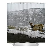 Elk In The Park Shower Curtain