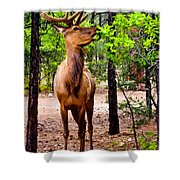 Elk - Mather Grand Canyon Shower Curtain