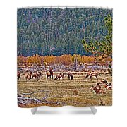 Elk Near Cub Lake Trail In Rocky Mountain National Park-colorado  Shower Curtain