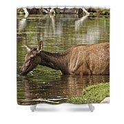 Elk Pictures 36 Shower Curtain