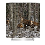 Elk Pictures 45 Shower Curtain