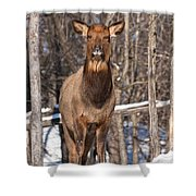 Elk Pictures 50 Shower Curtain