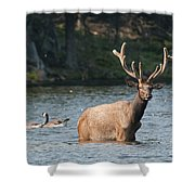 Elk Pictures 63 Shower Curtain