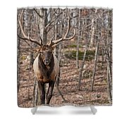 Elk Pictures 86 Shower Curtain