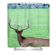 Elk Resting On A Meadow In Great Smoky Mountains Shower Curtain by Alex Grichenko
