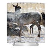 Elk Shaking Off Snow   #0530 Shower Curtain