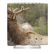 Elk Sky Gaze Shower Curtain