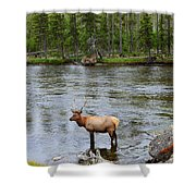 Elk Stag In The Madison River Of Yellowstone National Park Shower Curtain