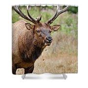 Elk Staring Shower Curtain