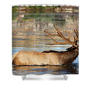 Elk Cooling Down In Lake Shower Curtain