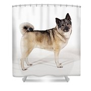 Elkhound Dog Shower Curtain
