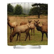 Elks Lodge Shower Curtain