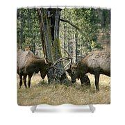 Elks Sparring Yellowstone Np Wyoming Shower Curtain