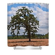 Elm Tree In Hay Field Art Prints Shower Curtain