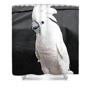 Elvis The Cockatoo Shower Curtain