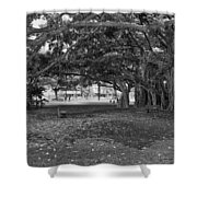 Embraced By Trees Shower Curtain