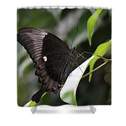 Emerald Peacock Swallowtail Butterfly #6 Shower Curtain