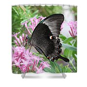 Emerald Peacock Swallowtail Butterfly #5 Shower Curtain