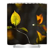 Emerging From The Darkness Shower Curtain