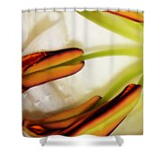 Emerging In Color Shower Curtain