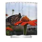 Emerging Monarch Shower Curtain