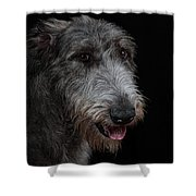 Irish Wolfhound II Shower Curtain