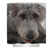 Irish Wolfhound IIi Shower Curtain