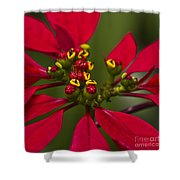 Emmets Home Shower Curtain