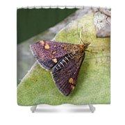 Emperor Moth Shower Curtain