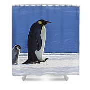 Emperor Penguin And Chick Shower Curtain