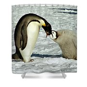 Emperor Penguin Chick Feeding Shower Curtain