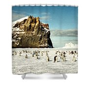 Emperor Penguin Colony Cape Washington Antarctica Shower Curtain