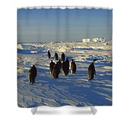 Emperor Penguin Group Walking On Ice Shower Curtain