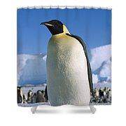 Emperor Penguin Portrait Antarctica Shower Curtain
